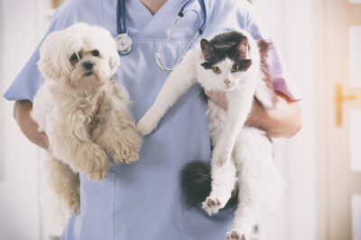 veterinarian holding cat and dog