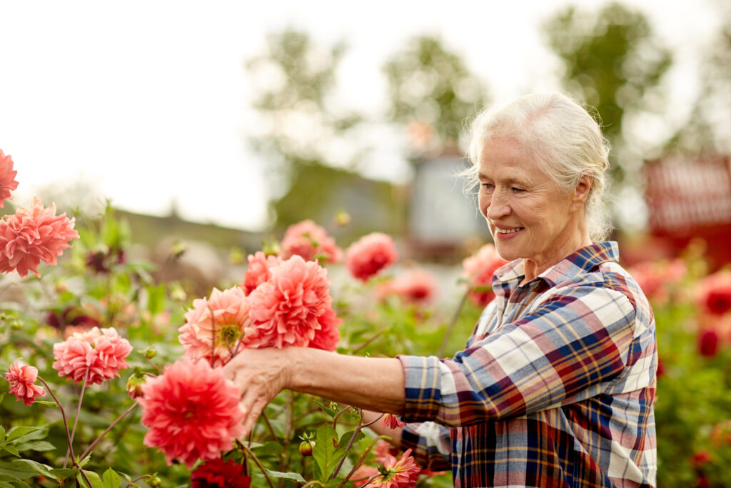 senior woman pruning flowers, plant therapy